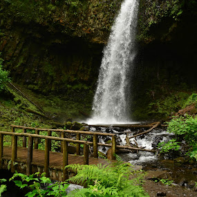 Upper Latourell Falls by Del Candler - Landscapes Waterscapes ( pool, green, waterfall, plants, forest, bridge,  )
