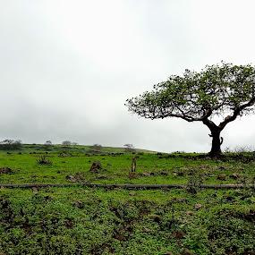 Alone by Avi Chatterjee - Instagram & Mobile Android ( plant, tree, oman, horizon, salalah )
