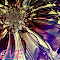 LOVEBYSxG33.jpg