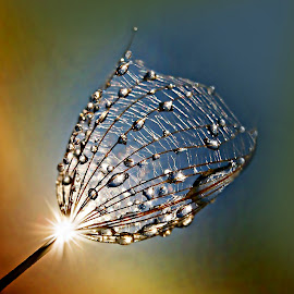 Message From The Sun by Marija Jilek - Nature Up Close Natural Waterdrops