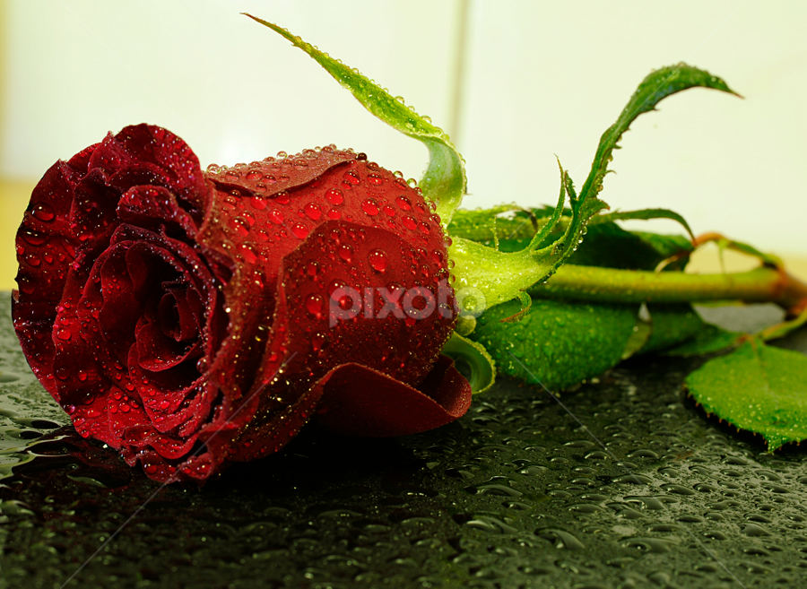 Flower by Jbern Eugenio - Nature Up Close Flowers - 2011-2013 ( macro, red, nature, fresh, anduk effendi, lovely, natural, flower )