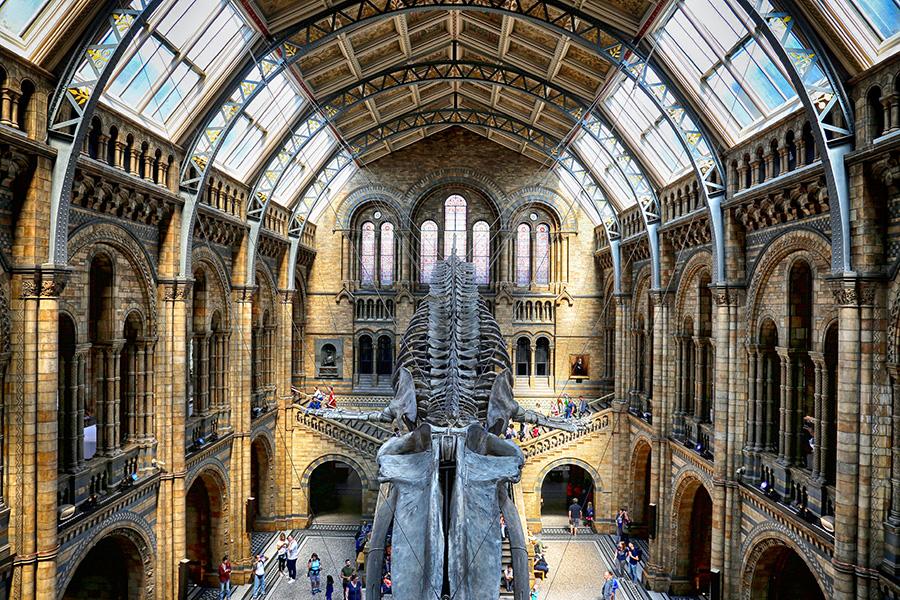 London Museum  by Abdul Rehman - Buildings & Architecture Public & Historical ( old, uk, london, architecture, museum, whale )