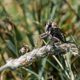 Mayfly by Jim Hendrickson - Novices Only Macro ( #nature, #close_up, #mayfly, #mayflies, #macro )