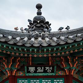 Unification by Andrei Ciuta - Buildings & Architecture Statues & Monuments ( pigeons, building, details, pagoda, colors, architectural detail, berlin, architecture, birds, korea )