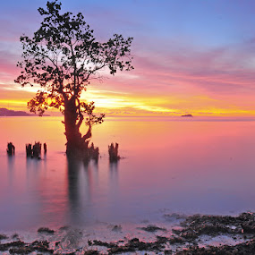lonely mangroove by Deddy Hariyanto - Landscapes Waterscapes