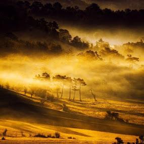 Foggy by Erol Ayyıldız - Landscapes Mountains & Hills ( fog, turkey )