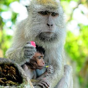 by Surya Hidayat HB - Animals Other