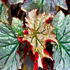 Colorful leaves by David Winchester - Nature Up Close Leaves & Grasses