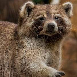 AOM-0804-02-15 by Fred Herring - Animals Other Mammals