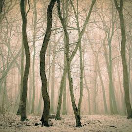 by Alin Achim R - Uncategorized All Uncategorized ( wild, winter, snow, forest, mist )