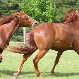 by Ann Bjerring Ravn Weis - Animals Horses