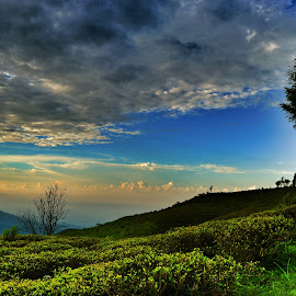 landscape by Uttam Das - Landscapes Mountains & Hills ( field, tea garden, sky, green, landscape,  )