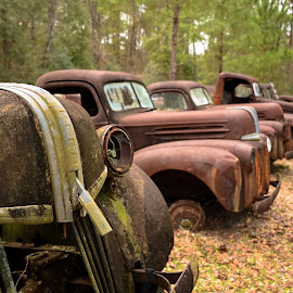 Ford Graveyard by Stephanie Snow - Transportation Automobiles ( car, old, vintage, rust, ford )