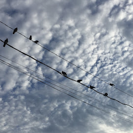 Bird on a wire  by Beth Hartung - Novices Only Wildlife