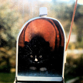 parcel to go- baby kitten air express by Traceystar Meyer - Animals - Cats Kittens