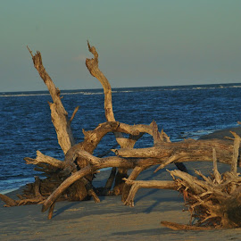 Driftwood by Prentiss Findlay - Landscapes Beaches ( beach driftwood, driftwood at beach, driftwood, ocean, beach )