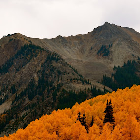 Surrounded by Orange by Seamus Crowley - Landscapes Mountains & Hills ( orange, mountains, fall, colorado, trees, rockies, leaves, aspen, ridge )