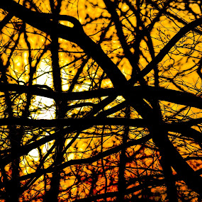 The Silhouette of Life by Pamela Chandra - Novices Only Abstract ( abstract, life, silhouette, sunset, negativity )