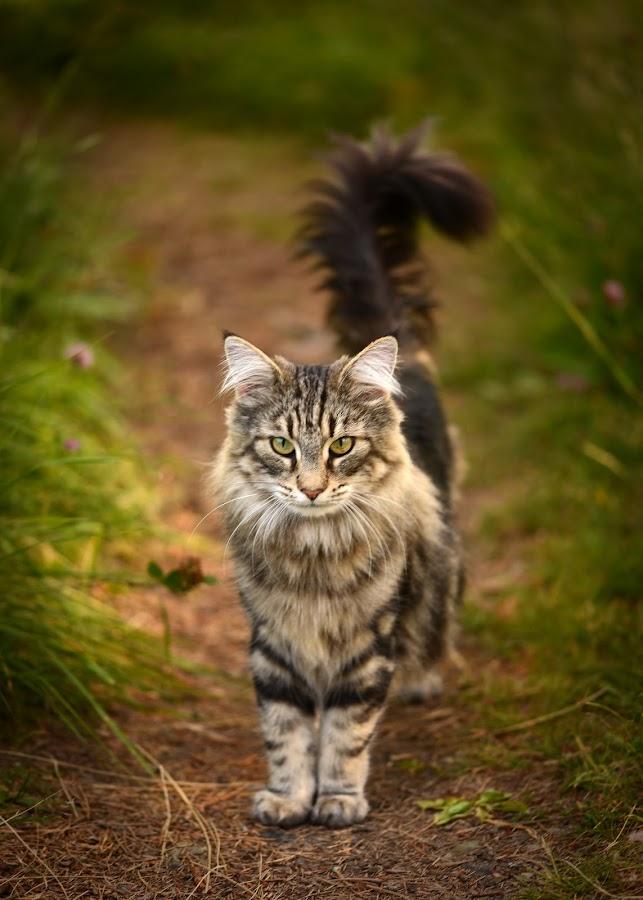 by Anngunn Dårflot - Animals - Cats Portraits