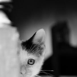 by Jude Walton - Animals - Cats Kittens
