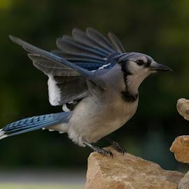Version 2 by Marie Schmidt - Animals Birds