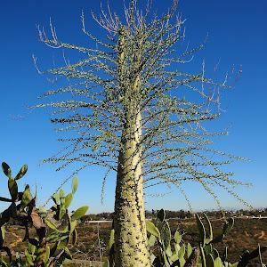 Cactus hérisson.jpg