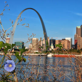 Morning glory, St Louis Arch by Margie Troyer - City,  Street & Park  Skylines