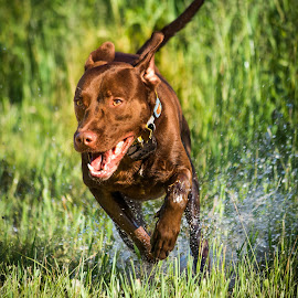 GUS by Mateusz Dudek - Animals - Dogs Running ( water, playing, sky, grass, happy, sunny, fun, day, dog, running )