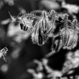 In flight  by Todd Reynolds - Black & White Flowers & Plants