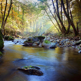 by Siniša Almaši - Landscapes Forests ( colors, forest, landscape, morning, woods, depth, nature, tree, trees, view, stones, rocks, light )