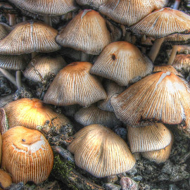 by Jette Helbig Hansen - Nature Up Close Mushrooms & Fungi