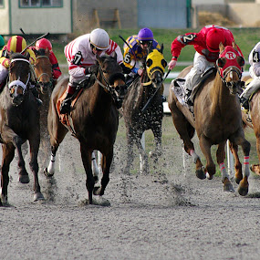 Race for the Finish by Jenny Gandert - Sports & Fitness Other Sports ( finish, jockeys, horses, racing, track, stretch, thoroughbreds )