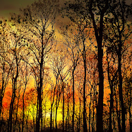 by Abhirama Arro - Landscapes Forests