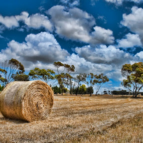 Country Scene by Peter Cannon - Landscapes Prairies, Meadows & Fields ( clouds, sky, meadow, nikon, landscape, fields, country )