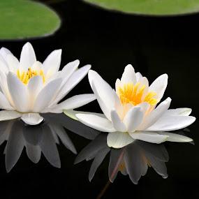 Couple by Eugenija Seinauskiene - Flowers Flowers in the Wild