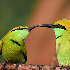 Share by Jayanta Pramanick - Animals Birds