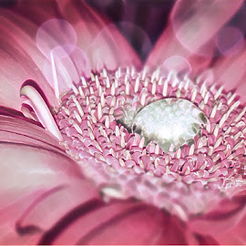 I dream in Pink by Teresa Solesbee - Instagram & Mobile iPhone ( macro, nature, pink, flower, water drop )