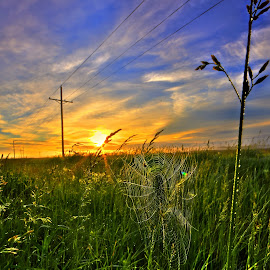 Morning Web by Derrill Grabenstein - Landscapes Prairies, Meadows & Fields ( web, sunrise, morning, spider web )