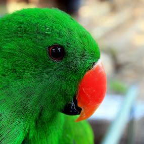 by Detector Guard - Animals Birds
