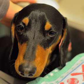 Bath time for Daxie! by Bradley Bath - Novices Only Pets