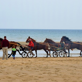Utah Beach, Normandy by Lynnie Keathley - Animals Horses