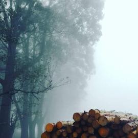 Misty work by Sonja Boshoff - Landscapes Forests