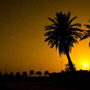 20120602-Sunset - Palm Trees.jpg