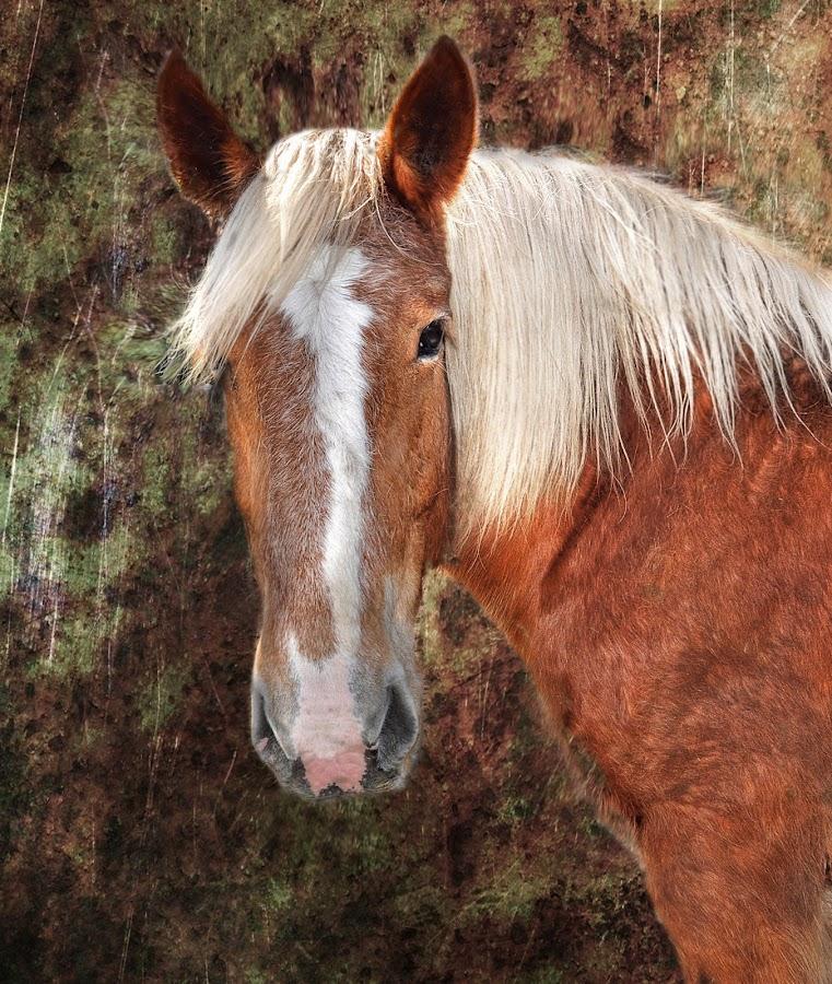 Belgian Mare by Irene Orloff - Animals Horses ( katie, horse )