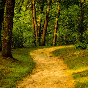 Curved Path in Evening by Chris Mowers - Landscapes Forests ( michigan, brighton, path, woods, hamburg )