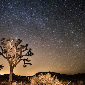 Night at the Dessert by Jerome Obille - Landscapes Starscapes ( joshuatree, sky, milykway, stars, night, glow, dessert, starry )
