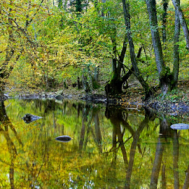 by Siniša Almaši - Nature Up Close Water ( water, nature, autumn, reflections, view, depth, colours, river )