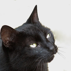 by Terry Linton - Animals - Cats Portraits