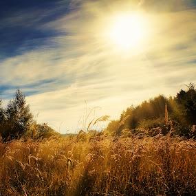 sun over the fields by Tomasz Marciniak - Landscapes Prairies, Meadows & Fields ( clouds, trees, summer, sun, fields )