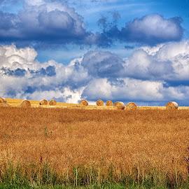 Harvest Season by Marco Bertamé - Landscapes Prairies, Meadows & Fields ( clouds, sjy, blue, sunny, hay bales,  )